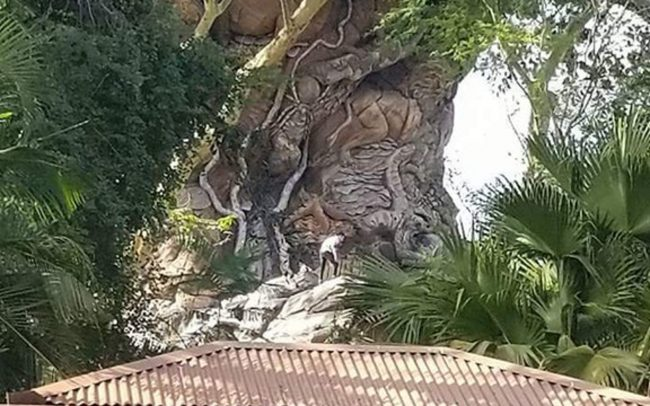 Guests climb Tree of Life at Disney Animal Kingdom