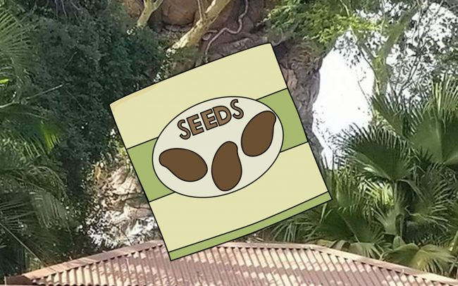 Guests climb Tree of Life at Disney Animal Kingdom plus a seed packe