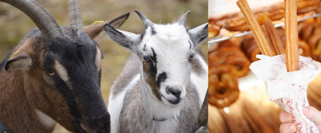 Goats and churros collide at Disneyland Park.