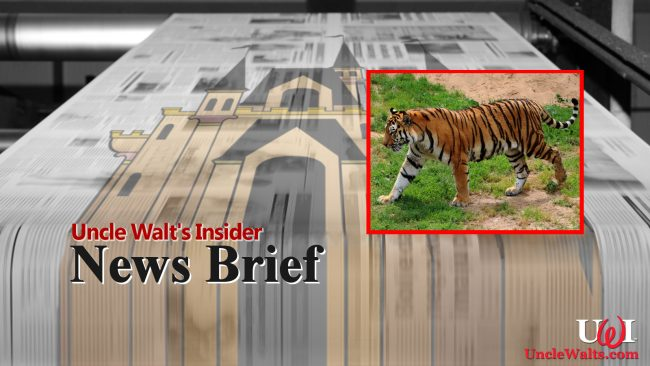 News Brief - it's a story about a tiger! Pretty tiger!