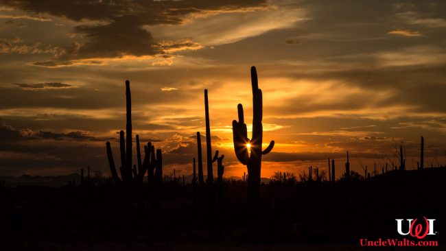Take your California vacation in Arizona! Photo by Cindy Devin [CC BY 2.0] via Flikr.