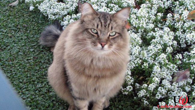 Lucifer, the first feral cat named Disneyland Ambassador. Photo by Jean [CC BY 2.0] via Flickr.