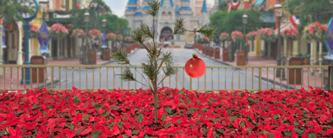 The Magic Kingdom's 65-foot-tall Christmas tree has just been planted.