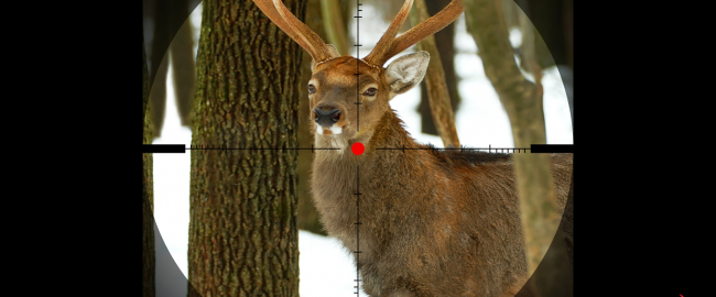 The first live-action Bambi; the search for a second is under way. Photo by insurancejournal.com via pinsdaddy.