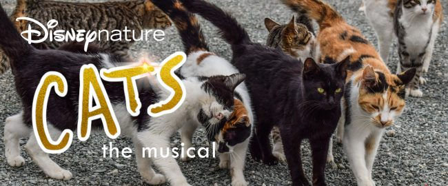 Pictured (front, L-R) Mr. Mistoffelees, Munkustrap, Macavity, Skimbleshanks (back, L-R) Jennyanydots, Grizabella, Rum Tum Tugger. Photo [CC0] via Pxhere.