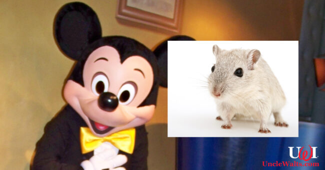 Meet Mickey's new voice! Photo by Loren Javier [CC BY-ND 2.0] via Flickr, & Pxhere.